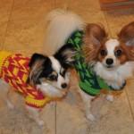 Decorative Loop Crochet Small Dog Sweater for Boys & Girls