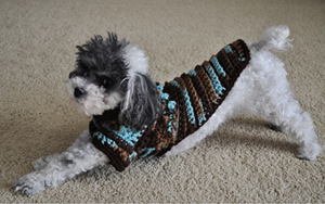 Bentley Wearing the Tiny Bobbles Crochet Sweater from Stitchwerx Designs