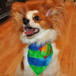 Jasper Wearing Striped Bandana with Monogram from Stitchwerx Designs
