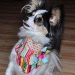 Lily Wearing Scallop Edge Bandana from Stitchwerx Designs