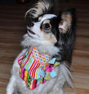 Lily Wearing Scallop Edge Bandana from Stitchwerx Designs