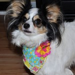 Lily Wearing Flower Bandana from Stitchwerx Designs
