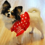 Lily Wearing Ruffle Collar Playtime T Shirt from Stitchwerx Designs